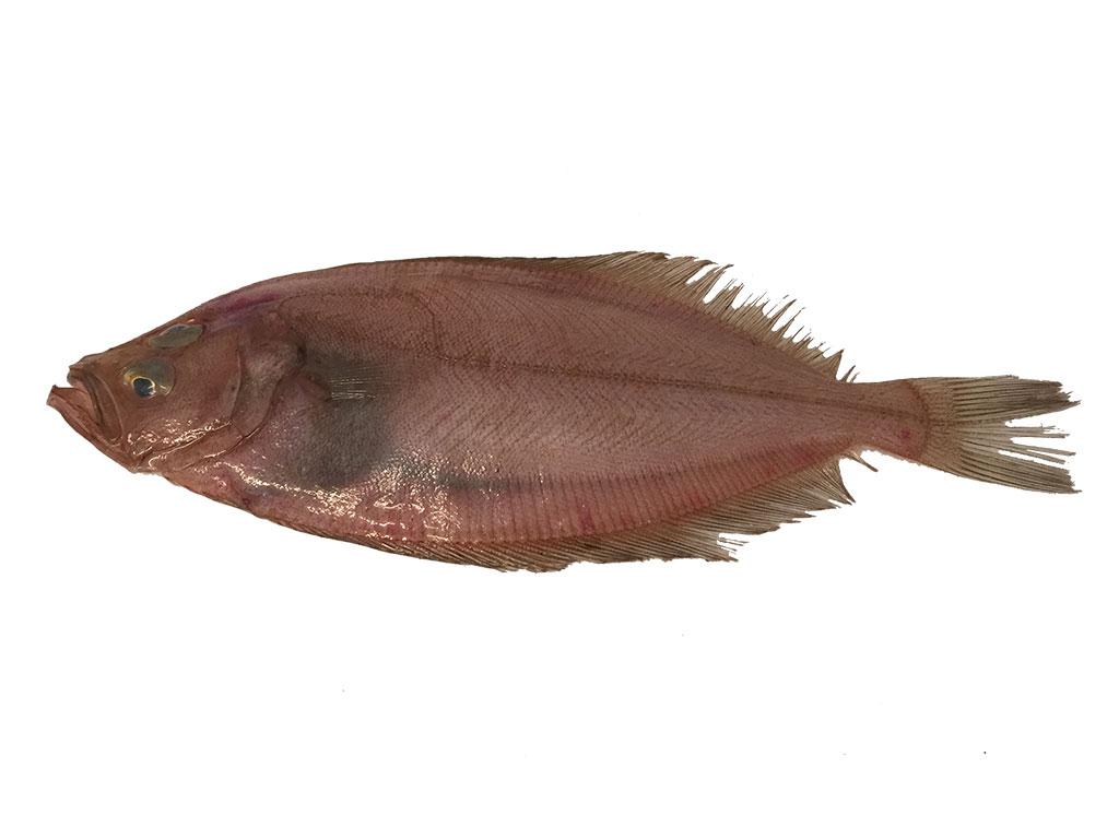 Que soños de peixes afumados